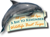 A Bay To Remember Logo